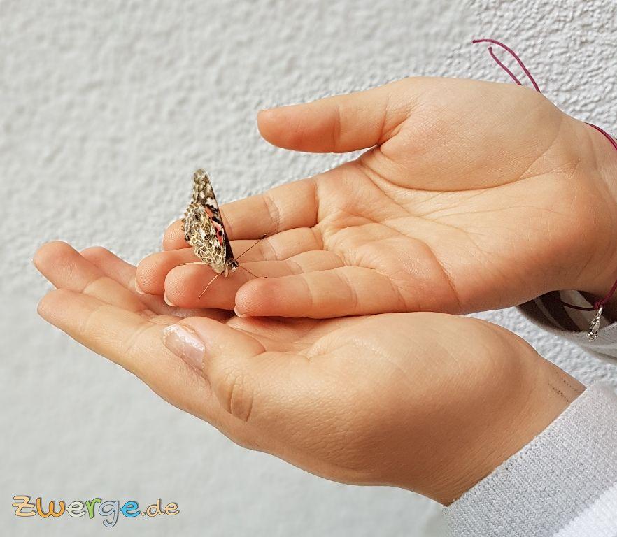 Schmetterlingsgarten - die Schmetterlinge in der Freiheit