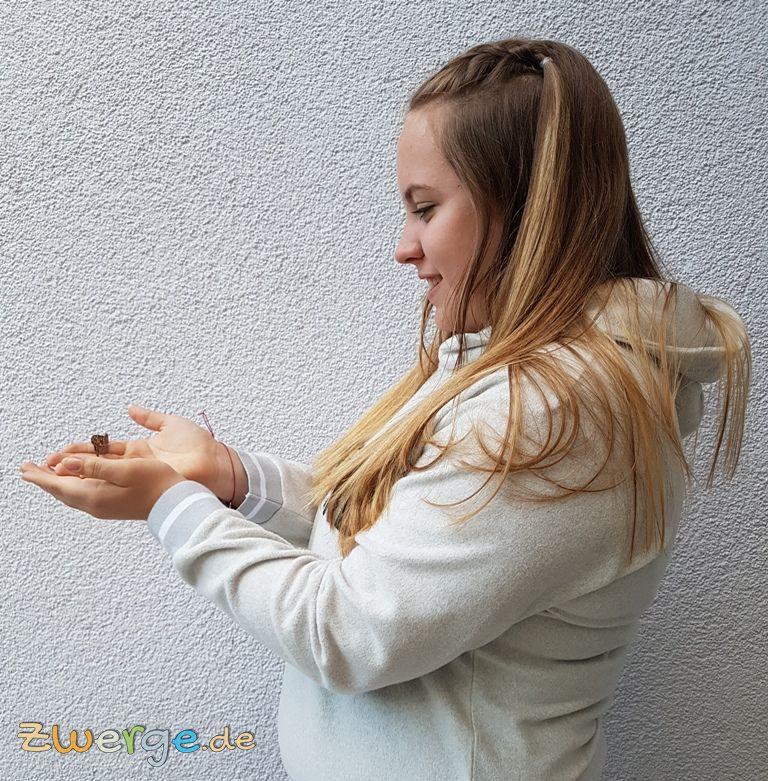 Schmetterlingsgarten - Schmetterlinge züchten und freilassen